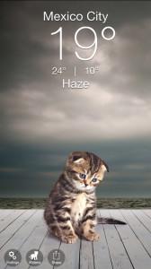 Gatitos del Clima
