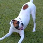 Doga, Yoga para perros