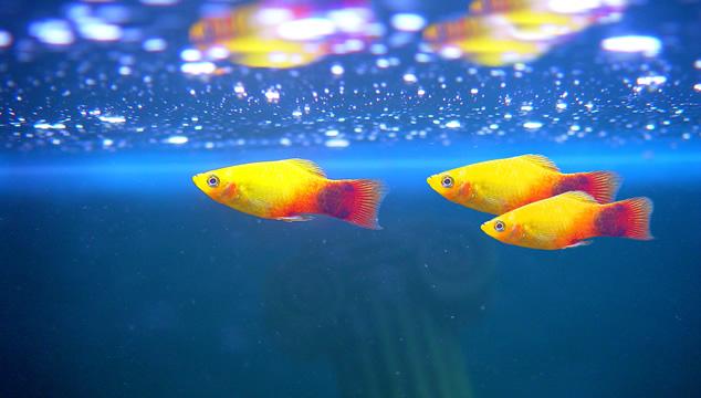 Información básica sobre peces