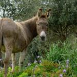 Datos curiosos sobre los burros