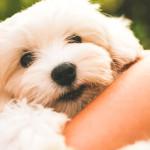7 razones para adoptar una mascota