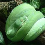 Datos interesantes sobre las serpientes