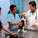 ¿Por qué son importantes las revisiones periódicas para tu mascota?