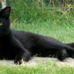 Juegos para tu gato que puedes hacer en casa