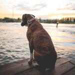 Lafisioterapia en mascotas