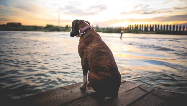 La fisioterapia en mascotas