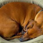 Tips para limpiar la cama de tu perro