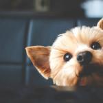 ¿Le puedo dar dulces a mi perro?