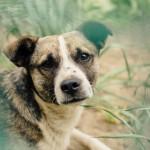 ¿Qué hacer si encuentro un perro perdido?