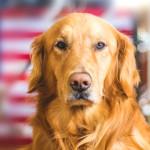 """¿Por qué se le despinta la """"nariz"""" a mi perro?"""