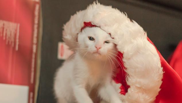 El mejor regalo para tu mascota en esta Navidad