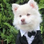 Las mascotas en bodas