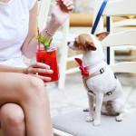 Los adolescentes como dueños de mascotas