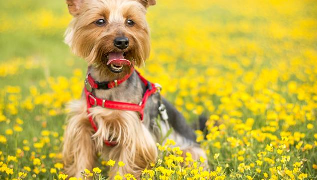 Prepara tu mascota para la llegada de la primavera
