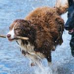 Actividades para realizar con tu mascota esta Semana Santa