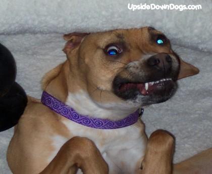 Fotos de perros vistos al revés