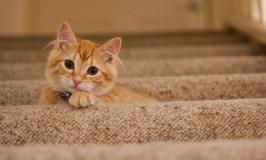 Entrenamiento en gatos