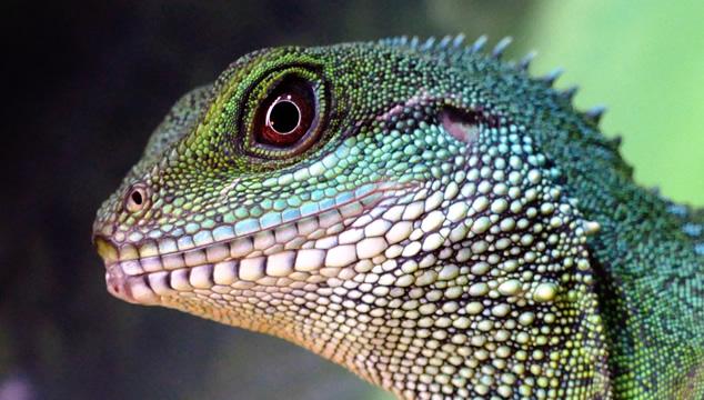 Conoce un poco más de los reptiles