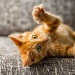 ¿Mi gato necesita ejercicio?