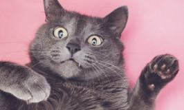 El Catnip, la hierba de los gatos
