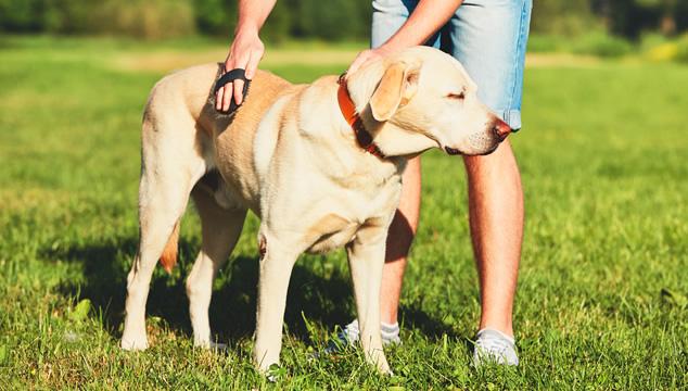 El cepillado en perros
