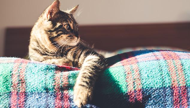 ¿Cuál es la mejor mascota para un departamento pequeño?