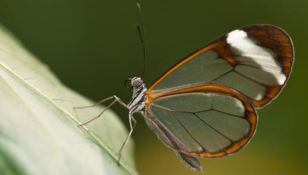 La mariposa de cristal