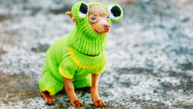 Perro disfrazado