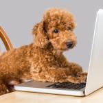 Tecnología para mascotas