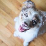 Cosas que necesitas para recibir a tu nuevo perro en casa