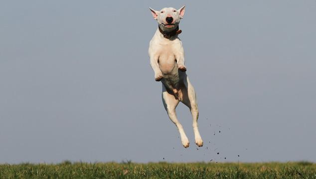 ¿Qué deporte practicar con tu mascota?