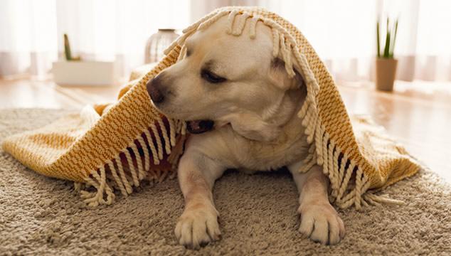 ¿Qué hacer con tu perro cuando te vas de vacaciones?