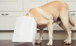 ¿Puedo darle a mi perro comida para gato?
