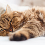 ¿Por qué acudir al veterinario con frecuencia?