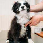 ¿Cómo saber si tu perro tiene un resfriado?