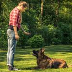 ¿Cómo motivar mentalmente a mi perro?