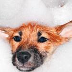 Con qué frecuencia debes bañar a tu perro
