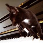 La música y las mascotas