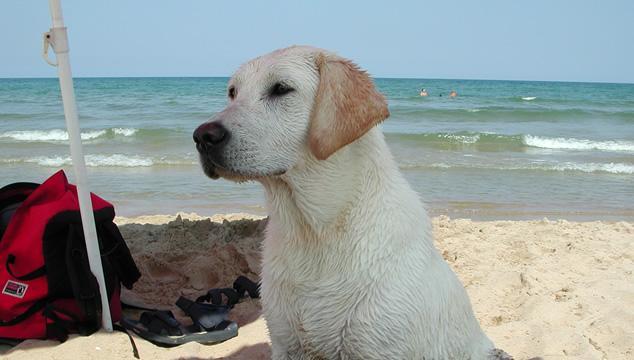 Lo básico que debes saber para salir de vacaciones con tu mascota
