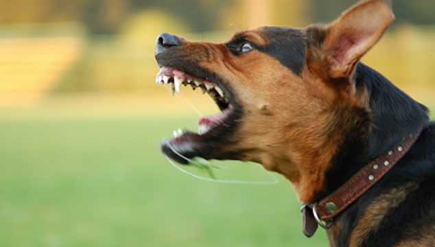 Lenguaje corporal en perros