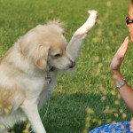 ¿Por qué mi perro es destructivo?