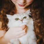 Loque debes saber sobre cargar a tu gato