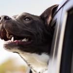 Cómo preparar a tu perro para un largo viaje en carretera