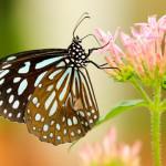 Las 8 cosas que debes saber sobre las mariposas