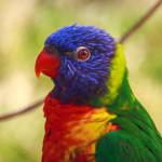 ¿Por qué tener un ave como mascota?