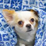 5 razas de perro con temperamento relajado