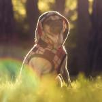 El otoño y las mascotas