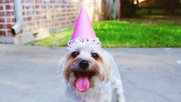 Por qué una mascota te hace sentir feliz