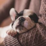 Lo que debes saber antes de adquirir un cachorro