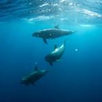 Datos curiosos sobre los delfines